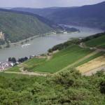 Hotel Zum Bären, Wandern auf dem Rheinsteig, Blick auf Assmannshausen
