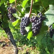 Das Weingut Thilo Strieth