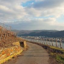 Weinwanderung Boppard