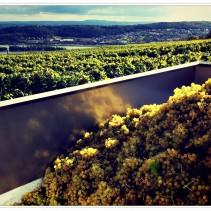 Wandern zur Weinlese