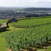 Rheinsteig Buchtipps