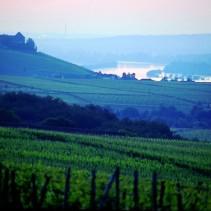 Rheinsteig im Rheingau